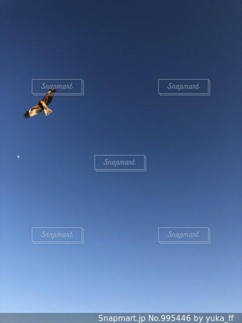羽ばたく鳥の写真・画像素材[995446]