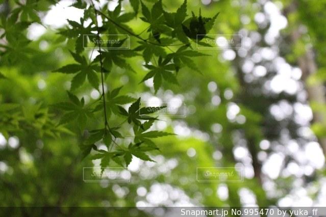 木の枝にとまった鳥の写真・画像素材[995470]
