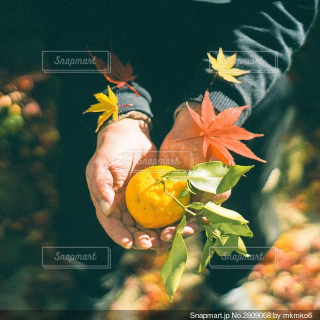 花をクローズアップするの写真・画像素材[2809068]
