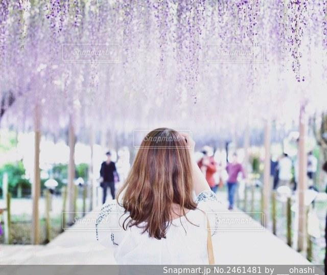 藤の花の前に立っている女性の写真・画像素材[2461481]