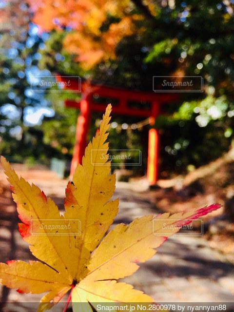 深秋の写真・画像素材[2800978]