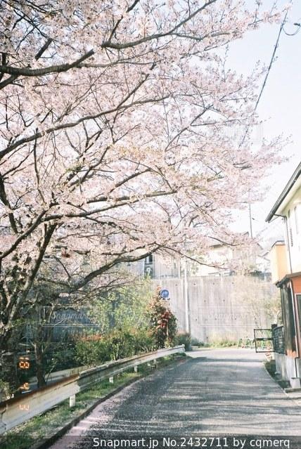 通学路の写真・画像素材[2432711]