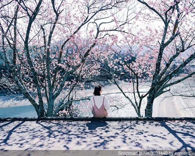 春の木漏れ日の写真・画像素材[3034440]