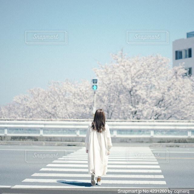 横断歩道の写真・画像素材[4231260]