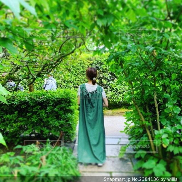 鎌倉のティンカーベルの写真・画像素材[2384136]