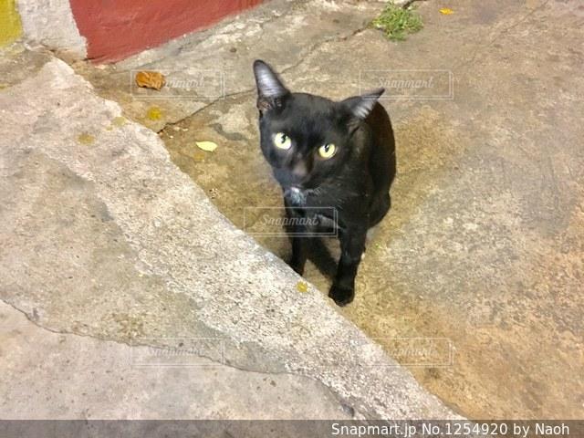 地面に横たわって黒猫の写真・画像素材[1254920]