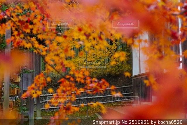 花のクローズアップの写真・画像素材[2510961]