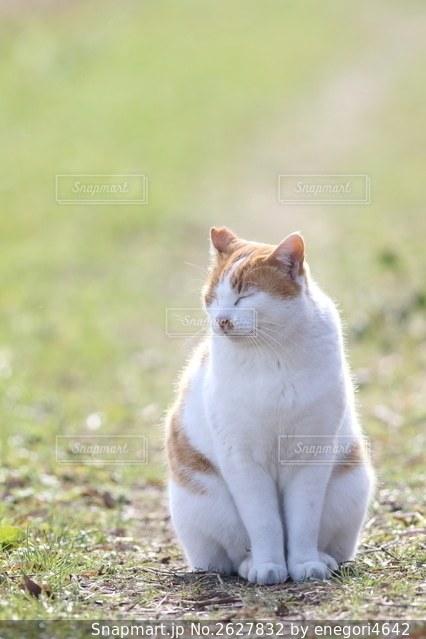 眩しそうな猫の写真・画像素材[2627832]