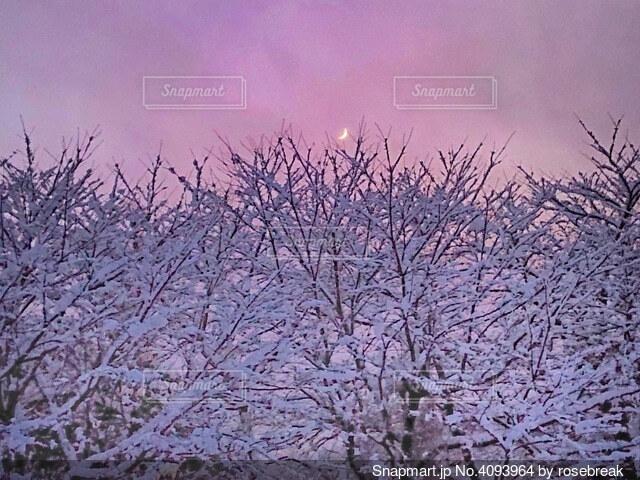 冬の三日月の写真・画像素材[4093964]