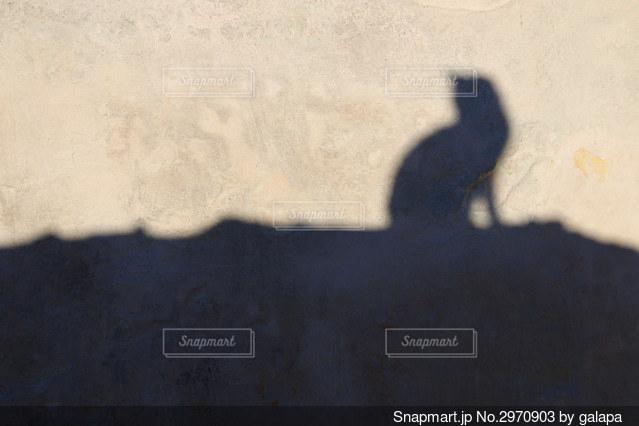 モロッコの猫の写真・画像素材[2970903]