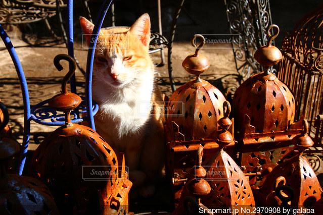 モロッコの猫の写真・画像素材[2970908]