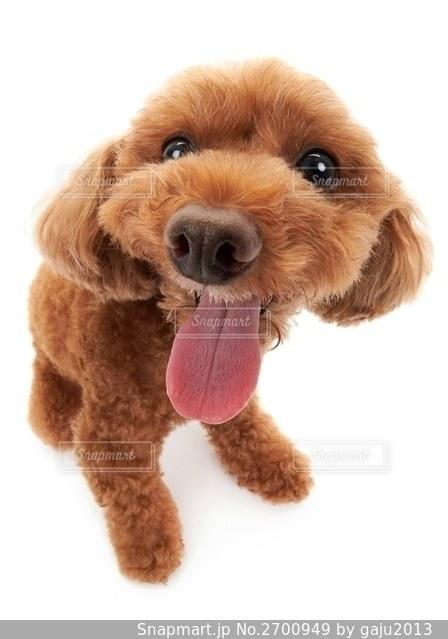 犬の隣に座っている大きな茶色のテディベアの写真・画像素材[2700949]