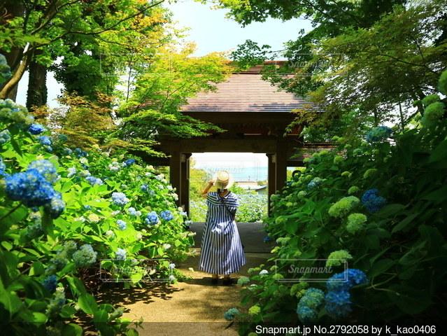 紫陽花と私の写真・画像素材[2792058]