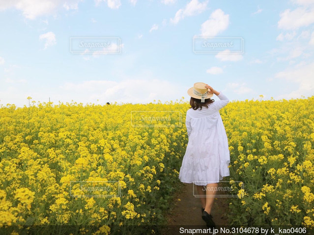 菜の花畑の小道の写真・画像素材[3104678]