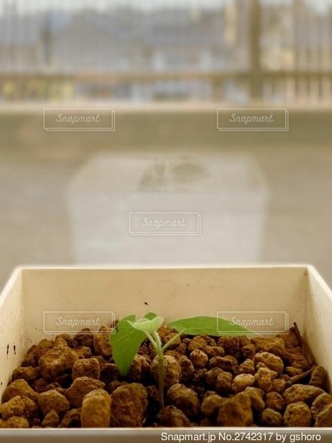 異なる種類の食べ物で満たされた箱の写真・画像素材[2742317]