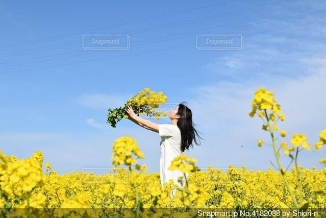 菜の花畑の写真・画像素材[4182038]