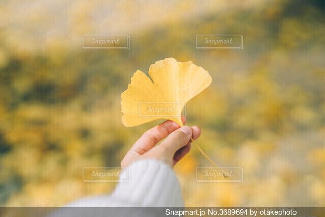 秋狩りの写真・画像素材[3689694]