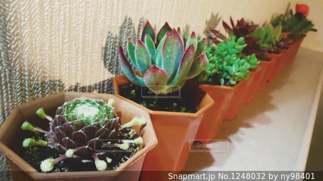 壁際の多肉植物の写真・画像素材[1248032]
