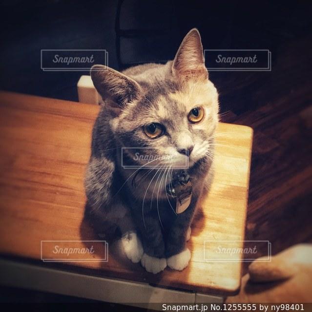木製テーブルの上に座っている猫の写真・画像素材[1255555]