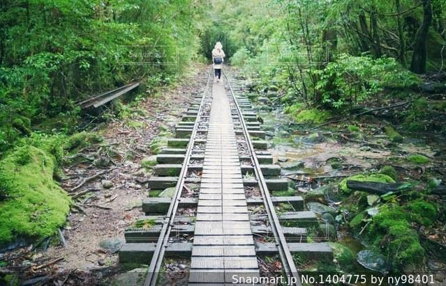 屋久島にての写真・画像素材[1404775]
