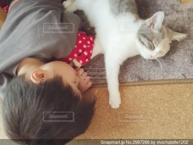 猫と寝る男の子の写真・画像素材[2987266]