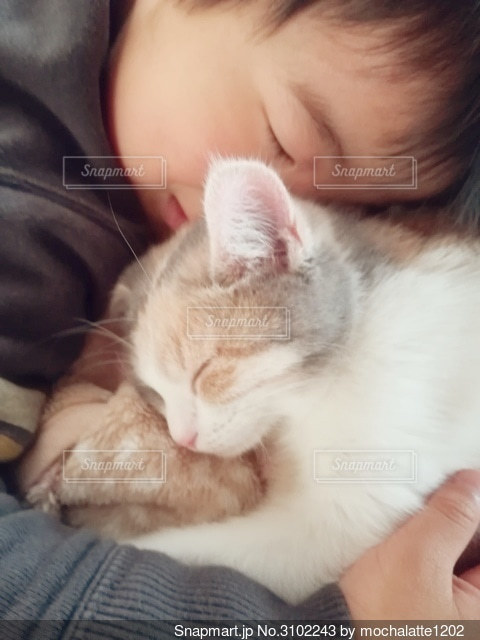 猫とお昼寝の写真・画像素材[3102243]