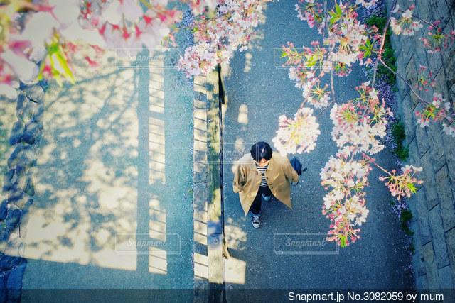 散歩道の写真・画像素材[3082059]