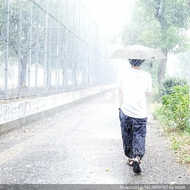 夏の雨の日の写真・画像素材[3669167]