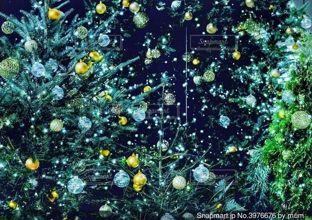 クリスマスツリーの写真・画像素材[3976676]