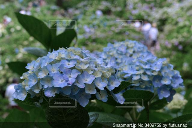 花のクローズアップの写真・画像素材[3409759]