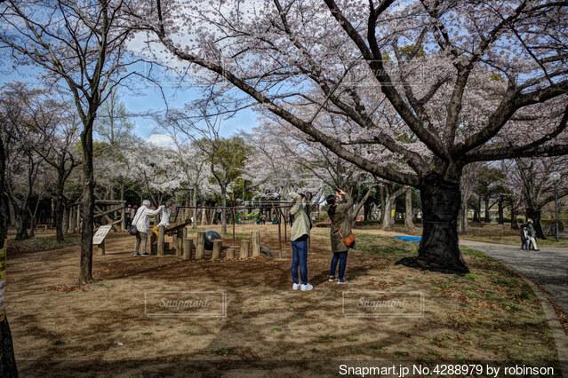 桜を撮り、楽しむ人々の写真・画像素材[4288979]