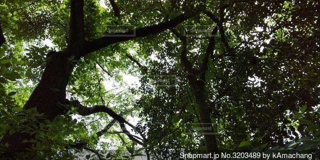 初夏の木洩れ陽の写真・画像素材[3203489]