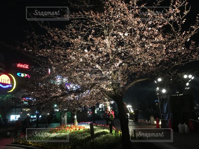 夜の写真・画像素材[121863]