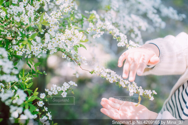 春の日の写真・画像素材[4269165]