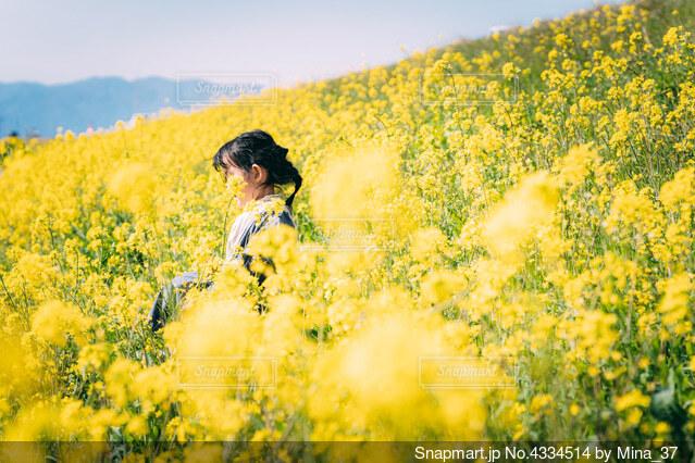 菜の花の中の女の子の写真・画像素材[4334514]