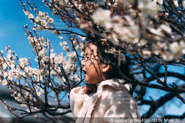 白梅の写真・画像素材[4395933]