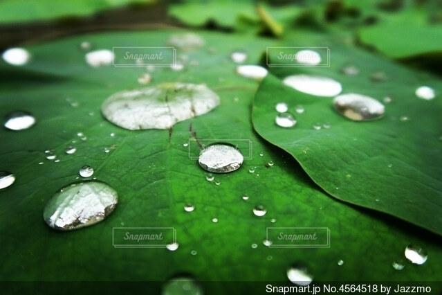 天然の水玉の写真・画像素材[4564518]