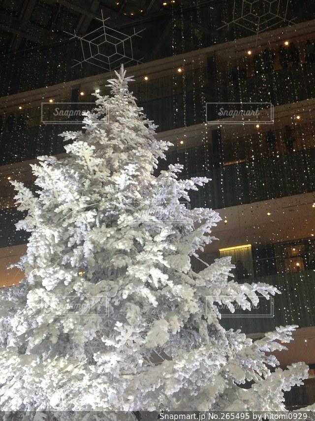 雪の写真・画像素材[265495]