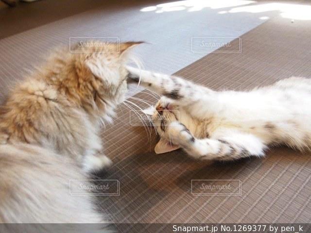 猫パンチの写真・画像素材[1269377]