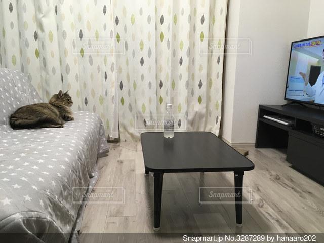 ソファーでオンライン授業を受ける猫の写真・画像素材[3287289]