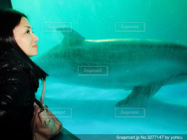 イルカに癒される人の写真・画像素材[3277147]