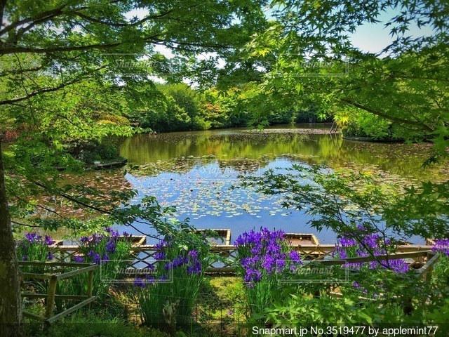 5月の池のほとりでの写真・画像素材[3519477]
