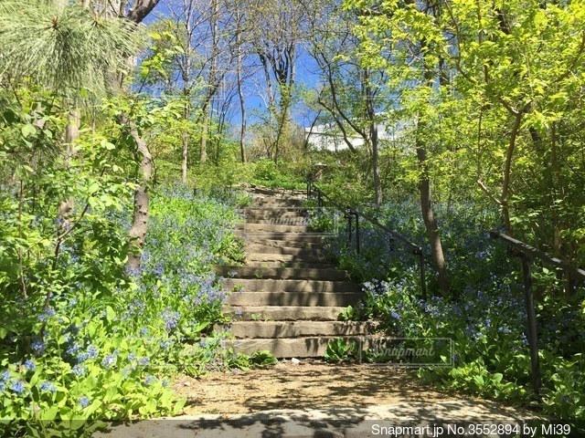 森の中の階段の写真・画像素材[3552894]