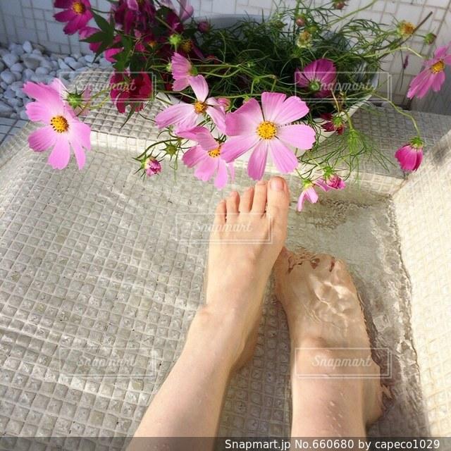 花の写真・画像素材[660680]