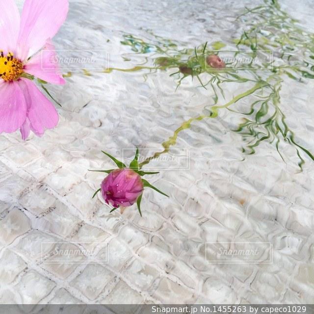 近くの花のアップの写真・画像素材[1455263]