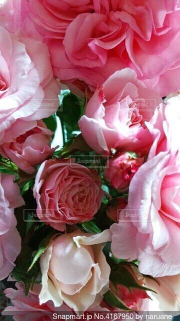 薔薇の花束の写真・画像素材[4167950]