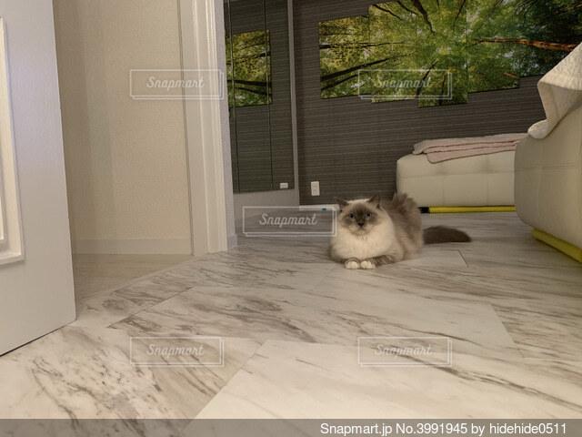 警戒している猫の写真・画像素材[3991945]
