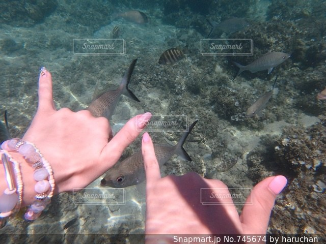 魚を持っている手の写真・画像素材[745674]