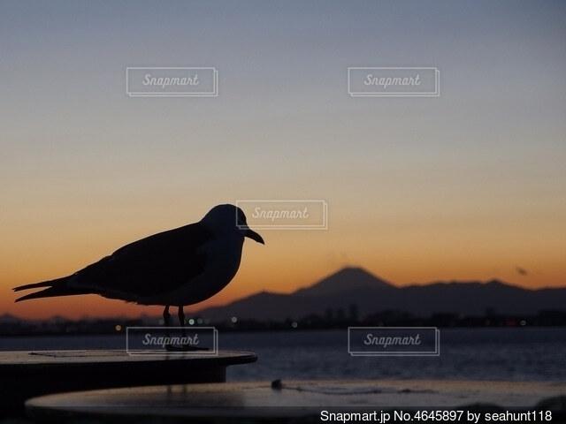 夕暮れ時 海を見つめるユリカモメの写真・画像素材[4645897]