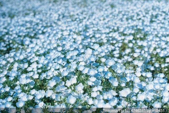 花のクローズアップの写真・画像素材[4746341]